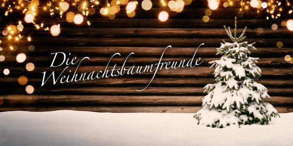 Leasing Weihnachtsbaum.Weihnachtsbaum Kaufen Oder Weihnachtsbaum Mieten