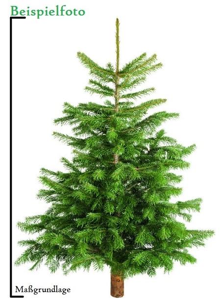 Tannenbaum Preise.Weihnachtsbaum Kaufen Oder Weihnachtsbaum Mieten
