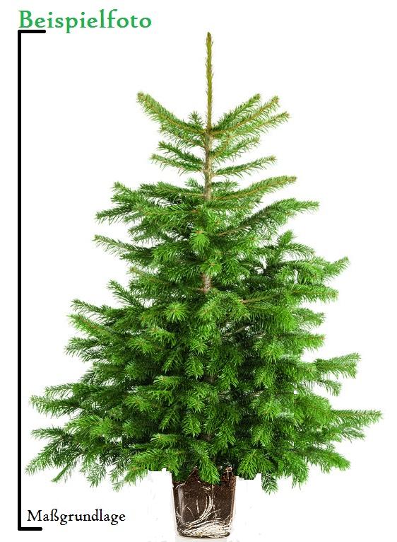 weihnachtsbaum im topf kaufen anwachsf hig. Black Bedroom Furniture Sets. Home Design Ideas
